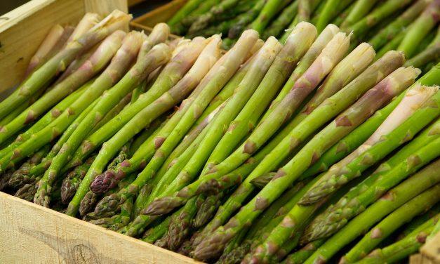 Szparagi – uprawa w ogródku